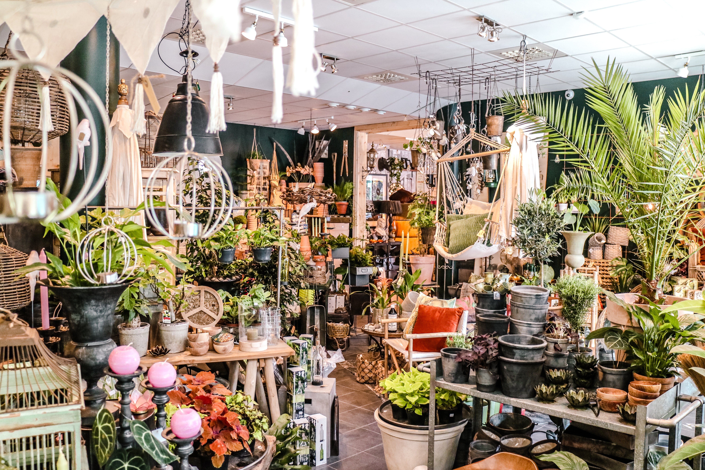 Oas för växter och inredning