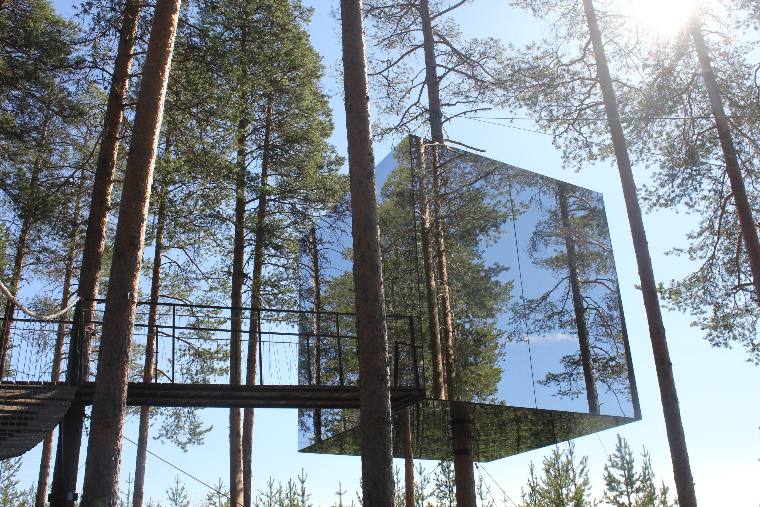 Vaggad till sömns av den svenska skogen – en naturupplevelse utöver det vanliga